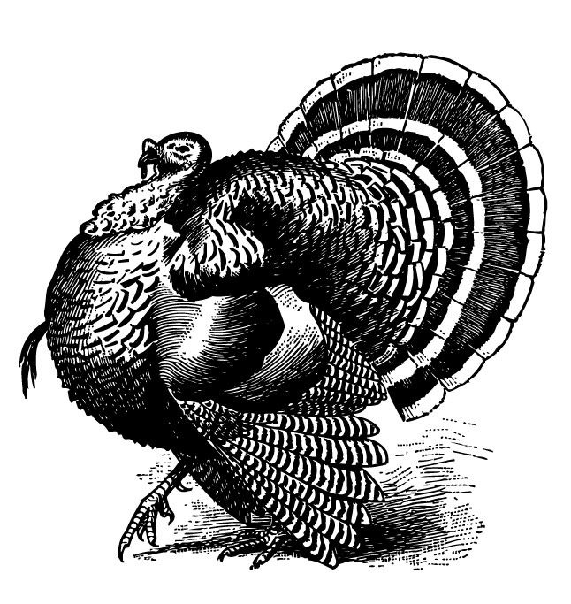 Free Thanksgiving Vintage Turkey Graphic