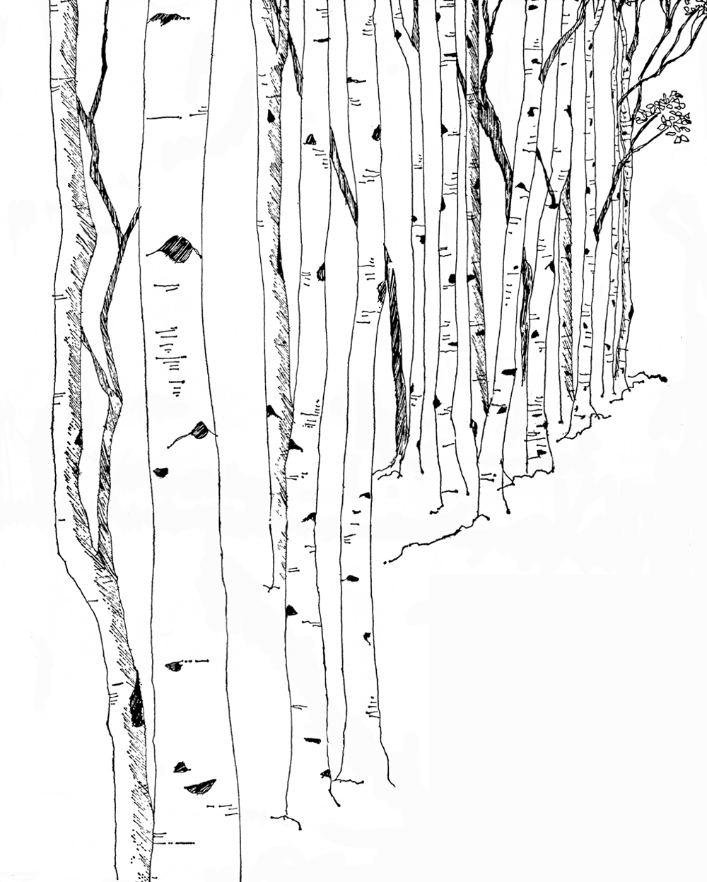 Black and White Birch Tree Graphic