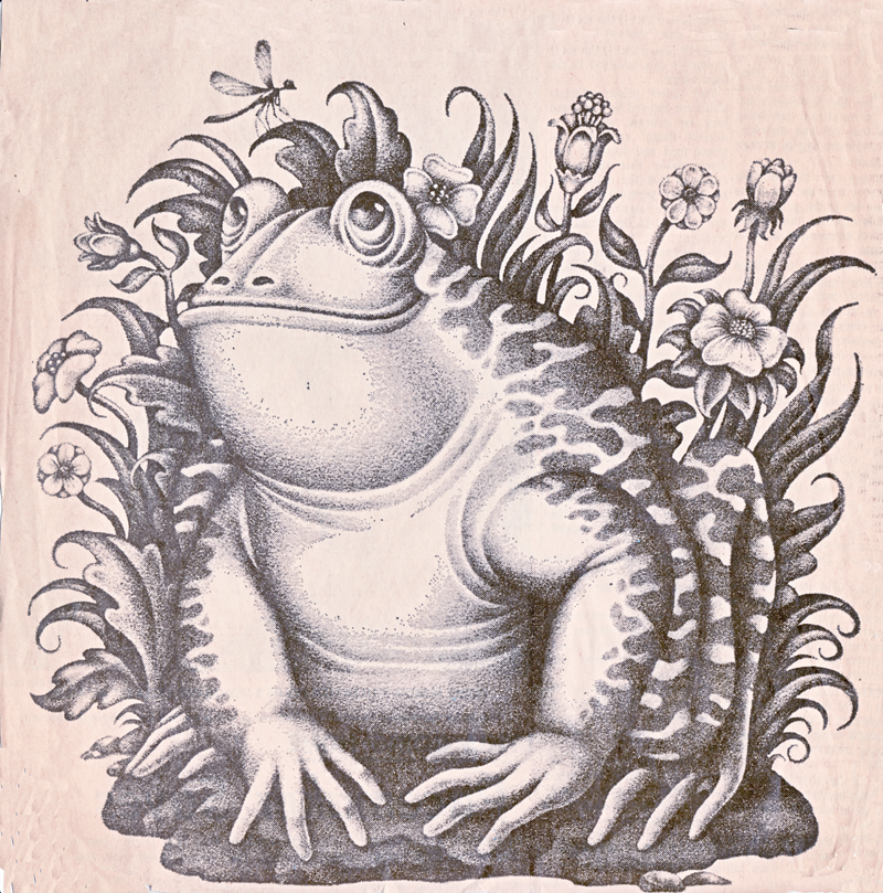 Goofy Frog Graphic Art